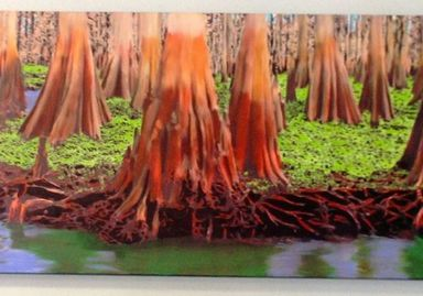 Art & Photos